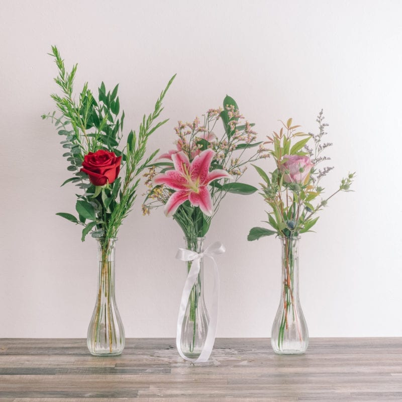 bloom in vase